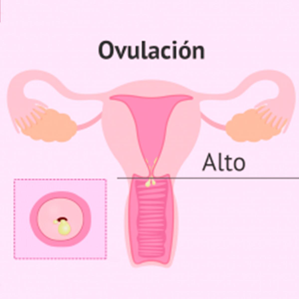 cambios-en-el-cervix-durante-el-ciclo-menstrual-cuadrada